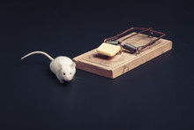 Mouse Near Ouse Trap With Copy Space