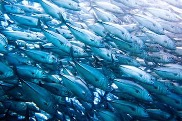 wall of tuna