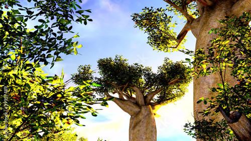 Door stickers Baobab African baobabs