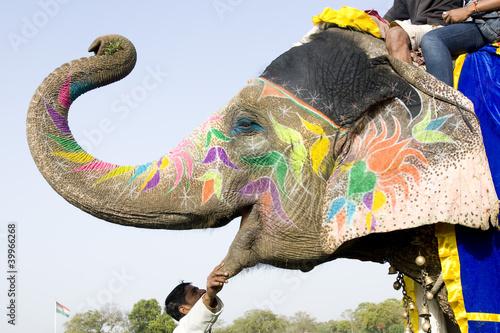Foto op Aluminium India hand painted colorful elephant profile, Rajasthan, India