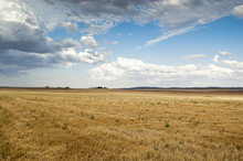Stubble Field In An Agricultur...