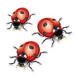 Ladybugs vector illustration.