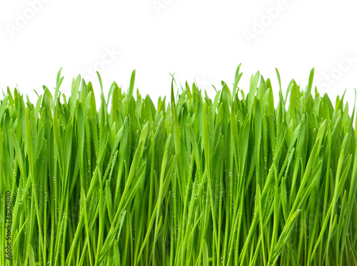 Deurstickers Gras fresh green spring grass with water drops
