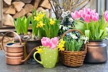 Tulips, Snowdrops And Narcissu...