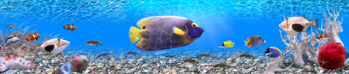 Fototapeta Underwater world - panorama