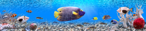 Foto op Canvas Onder water Underwater world - panorama