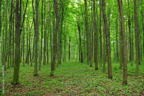 Spoed Foto op Canvas Weg in bos Trees