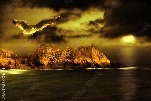Poster Pleine lune Seagull flight