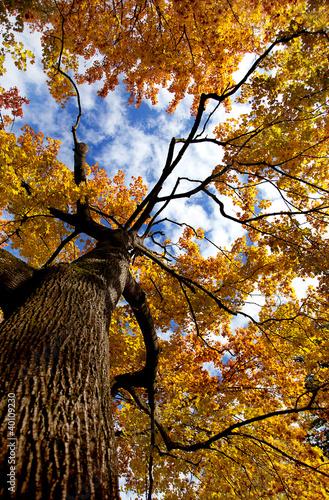 Fototapety na sufit   jesienia-drzewa