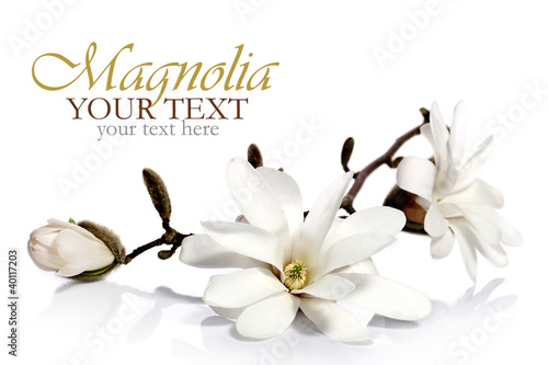 Door stickers Magnolia Magnolia flowers border
