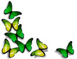 Green and yellow butterflies, isolated on white background