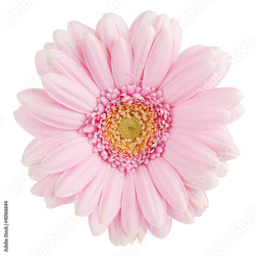 Door stickers Gerbera Pink gerbera flower
