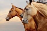 konie - 40172056