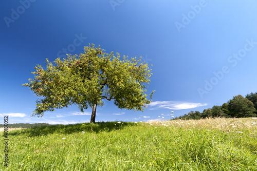 Foto-Kissen - Apfelbaum im Sommer (von AnnaReinert)