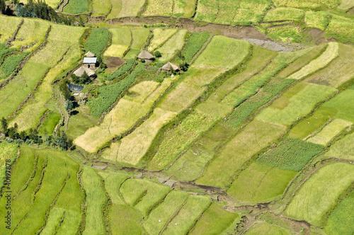 Staande foto Afrika African fields