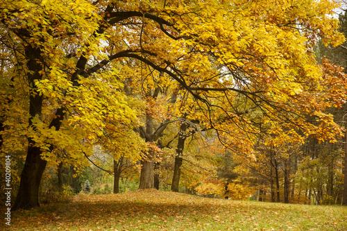 jesien-zloto-drzewa-w-parku