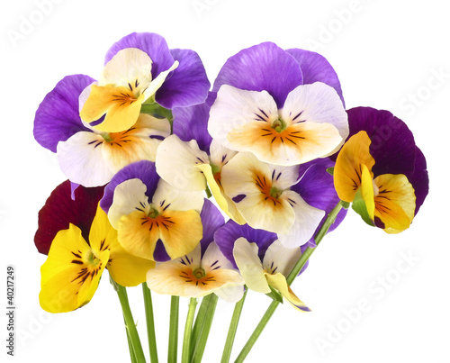 Ingelijste posters Pansies pansy flowers on white