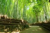 Fototapeta Bamboo - 竹林の小道