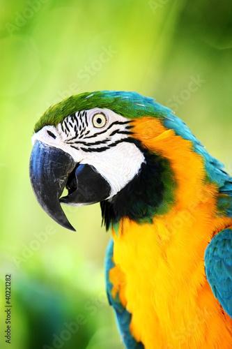parrot #40221282