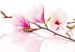 Leinwandbild Motiv Pink spring flowers with reflection