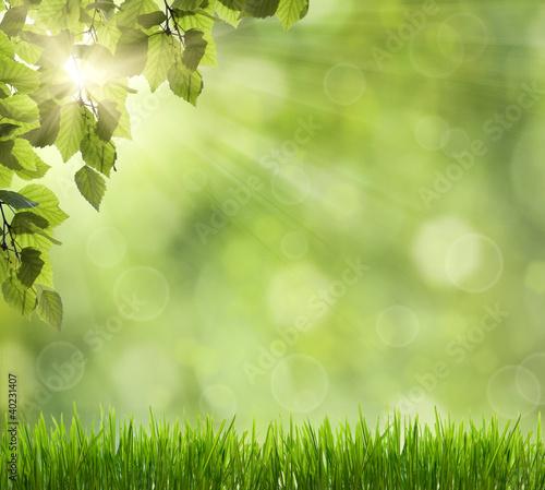 Foto-Kissen - Beautiful Nature Bokeh