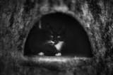 Fototapeta Zwierzęta - Dom