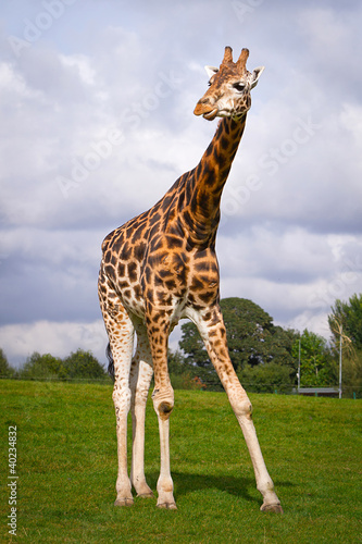 Photo  Giraffe in the wildlife park