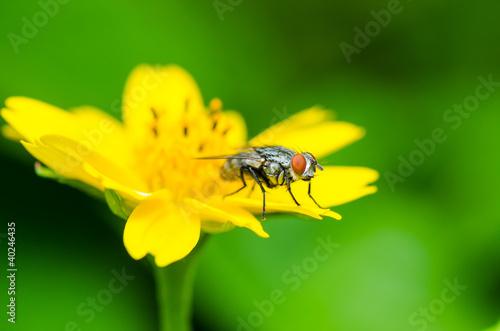 Aluminium Prints Bee fly macro in green nature