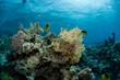 canvas print picture Beautiful underwater scene of fishes swimming