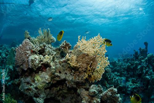 canvas print motiv - eothman : Beautiful underwater scene of fishes swimming