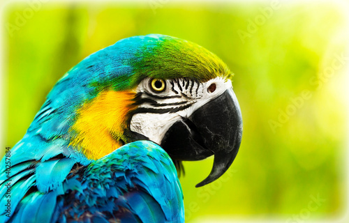 Foto op Canvas Papegaai Exotic colorful African macaw parrot