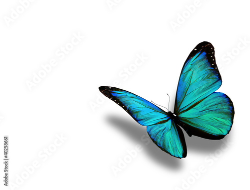 Fotografía  Turquoise butterfly, isolated on white background