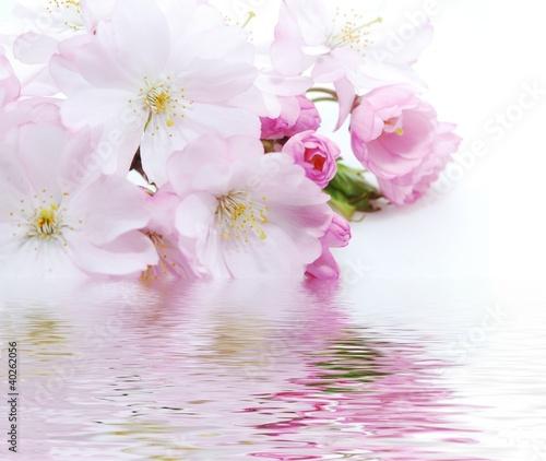 rozowy-kwiat