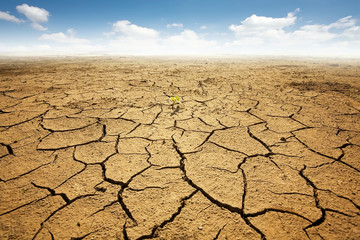 Dryed land with cracked ground. Desert