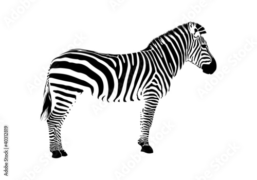 Fototapeta zebra silhouette obraz