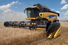Combine Harvests Wheat On A Fi...