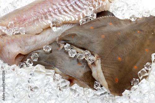 Fotografia Fresh flounder on ice closeup