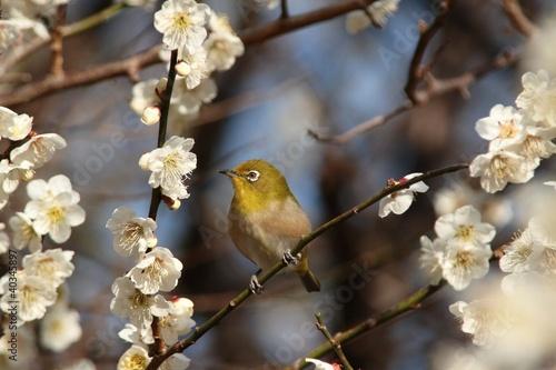 Fototapety, obrazy: 春の気配