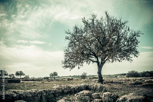 Zastosowanie fototapet styl-vintage-drzewa