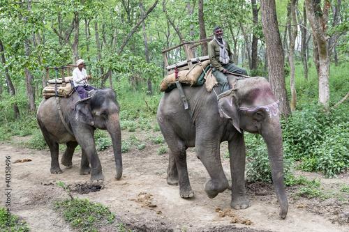 Staande foto Nepal Elephants in jungle