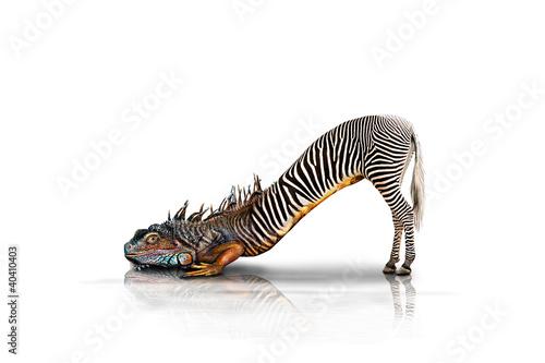 Poster Zebra Zebraechse