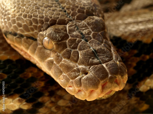Photo Serpent anaconda
