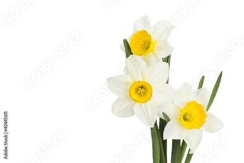 Papiers peints Narcisse narcissus flowers