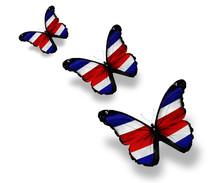 Three Costa Rica Flag Butterfl...