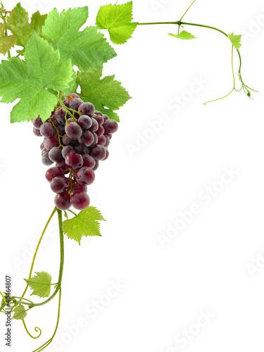grappe de raisin et feuilles de vigne, coin de page Fototapete