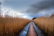 Wooden Pathway In Wetland