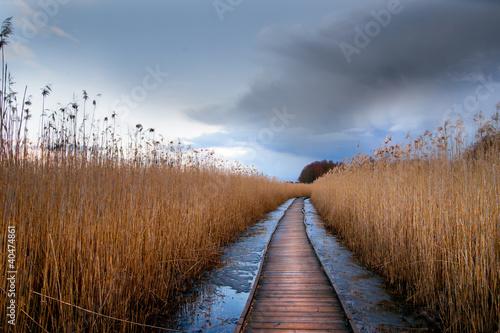 Wooden pathway in wetland Fototapeta