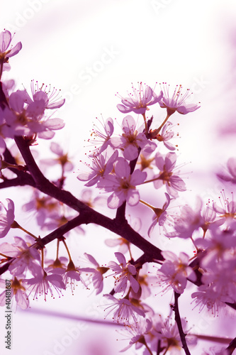 Fototapeta wiosna galazka-kwiatow-wiosna