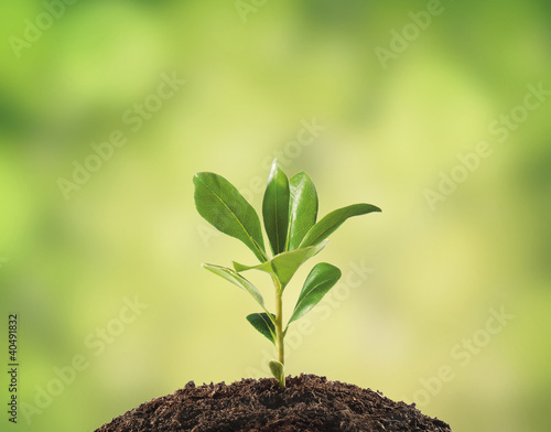 Tuinposter Planten Small plant on pile of soil, part of it reflected