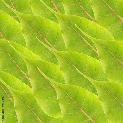 green leaves background - 40513249